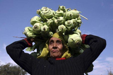 زنان-کشاورز