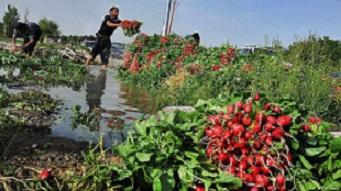 زمین های کشاورزی جنوب تهران